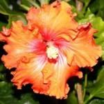 pr mental illness flowers 1542_ne_photo_stories1_98b2a